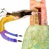 LA BRUJA DE LOS CUENTOS. (Libro de la autora Rosalba Guzmán Soriano). Ilustración interior en acuarela (2008).